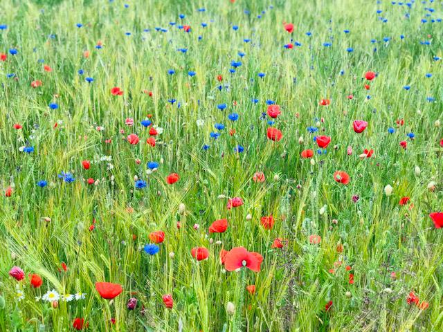 strandgaarden-retreat-blomst (2)